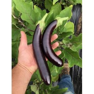 Aubergine noire Hansel Bio 1 unité