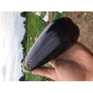 Aubergine noire Grosse bio