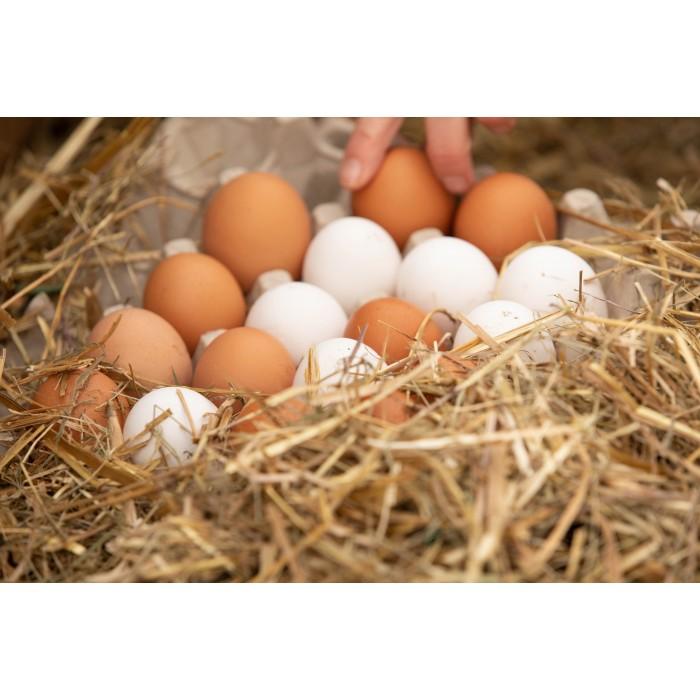 Œufs frais de poules en liberté